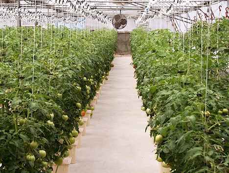 NYS Farms Generate Billions