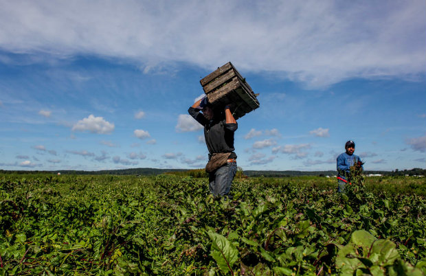 NY Legislature Passes Labor Rights For Farmworkers