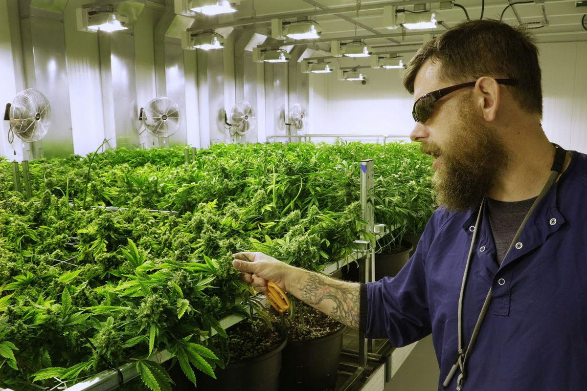 Illinois Cannabis Workers Unionize